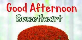 Best Good Afternoon Quotes