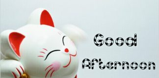 Good Afternoon Wishes & Wallpaper