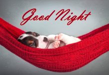 Good Night Image Download