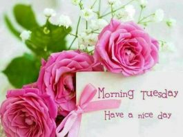 Happy Tuesday Pics And Quotes
