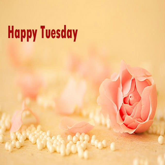 Happy Tuesday Pics And Quotes 3