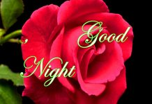 Good Night Photo & Messages