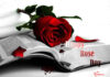 Happy Rose Day for Whatsapp