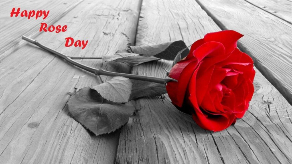 Happy Rose Day for Whatsapp 2