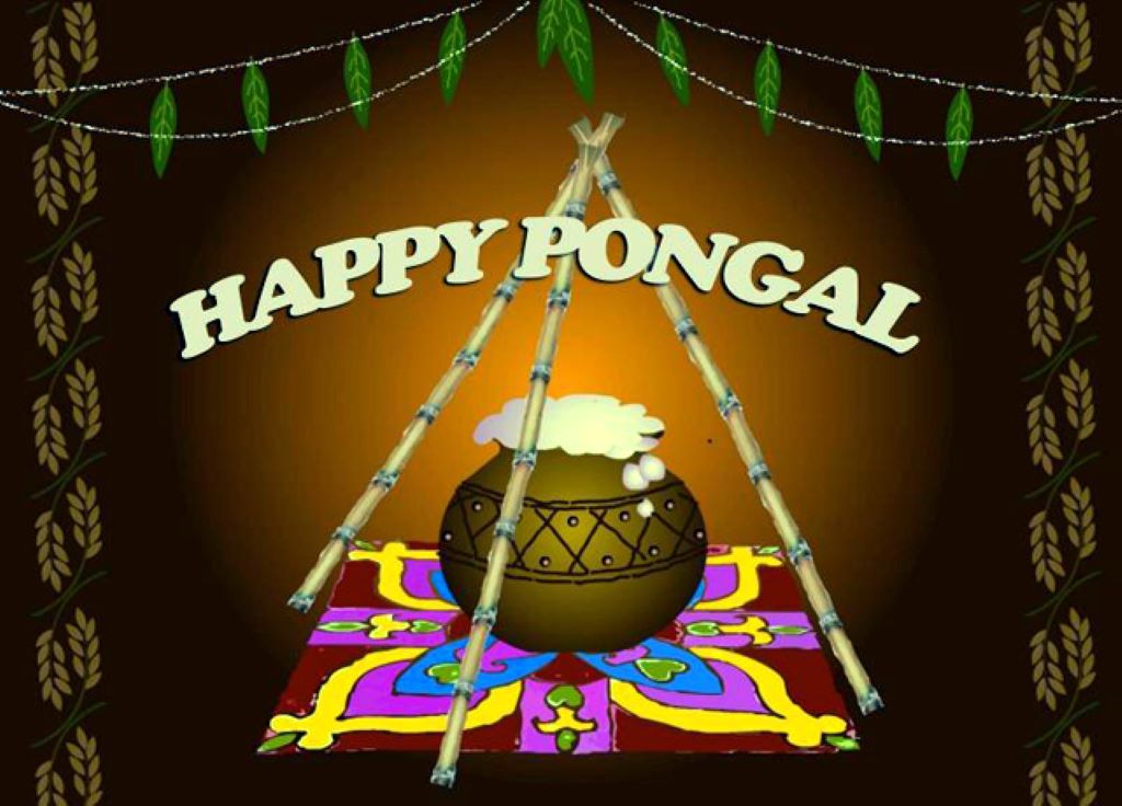 Pongal Festival Images Wallpapers 2