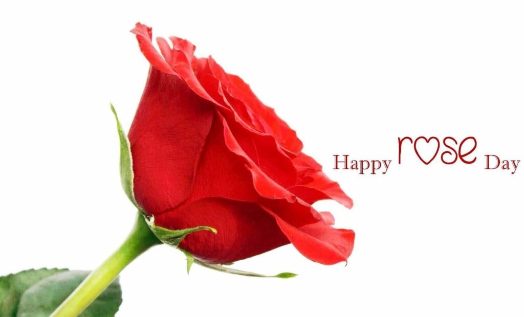 Wishing Rose Day Quotes 3
